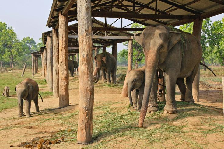 elephant-breeding-center-near-chitwan-johnathan-ampersand-esper.jpg